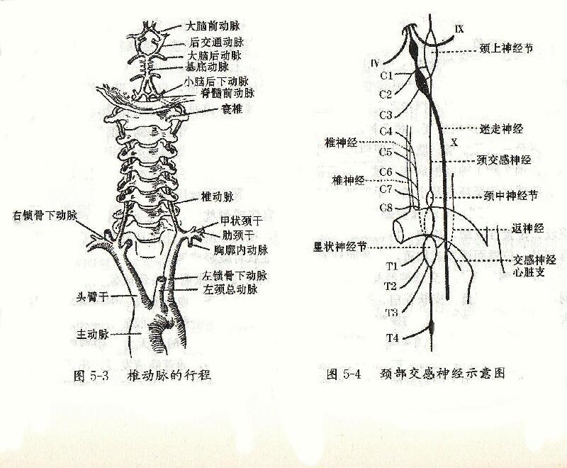 頚椎症、頚腕症候群、頭痛に